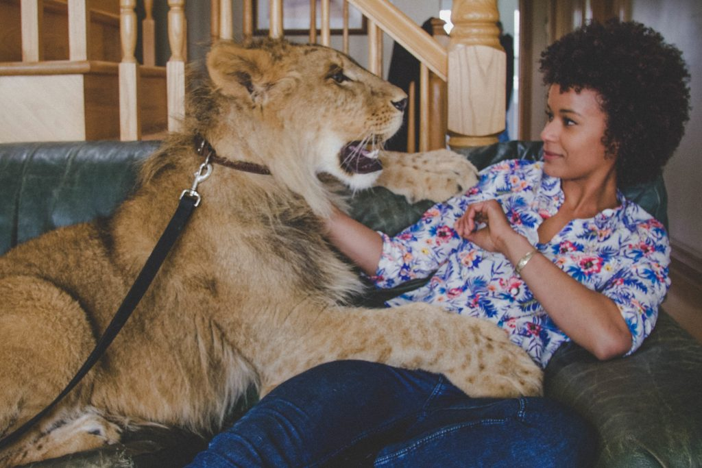 Fous des animaux lion marieme ndiaye copyright guillaume fortier 10Ave fr 5 fda3 ep31 scaled